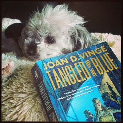 Murchie reclines on a fuzzy, cream-coloured pillow. Immediately in front of him, occupying most of the shot, sits a paperback copy of Tangled Up In Blue by Joan D. Vinge. The title and author are prominently displayed, while a pale-skinned blonde woman backed by two figures of indeterminate gender sit in the bottom corner, mostly cut off by the shot. The art is primarily blue-toned