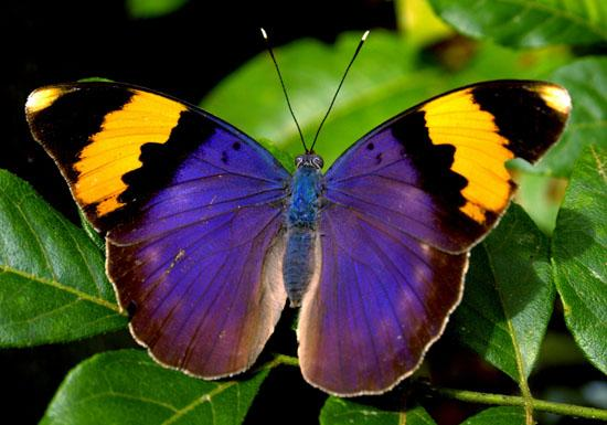josefaTropical Rainforest Butterflies