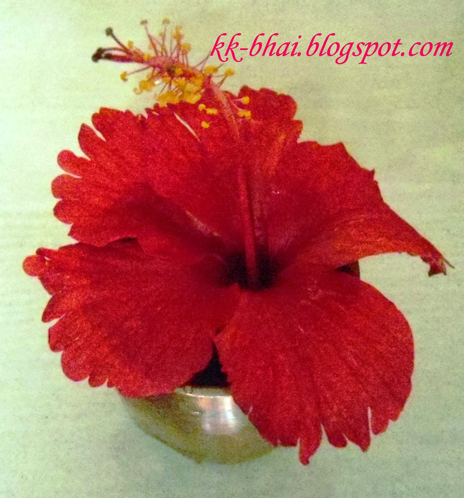 Puja flowers and other things used in puja hindu worship ekahari arhul hibiscus with a single layer of petals the favorite flower of goddess kali izmirmasajfo