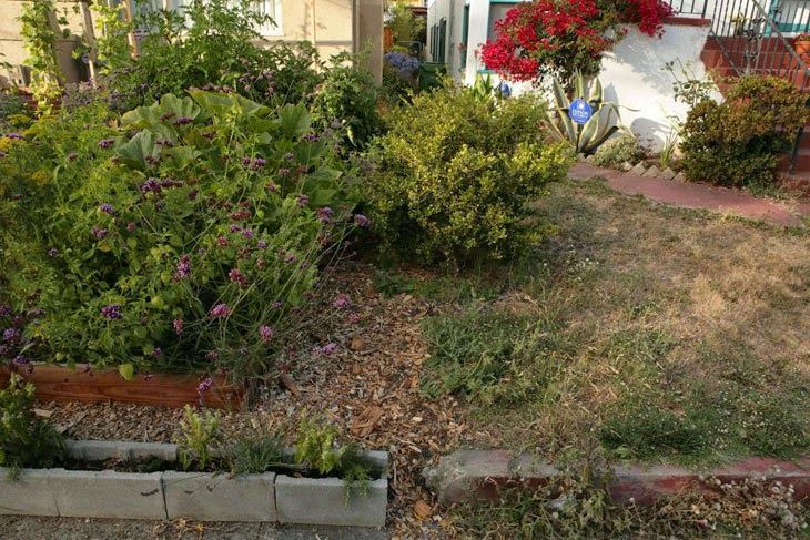 A look at the neighbor's lawn does not make a winning case in grass' favor. - He Started With Some Boxes, 60 Days Later, The Neighbors Could Not Believe What He Built