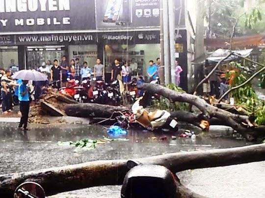 Cây đổ đè trúng 4 người giữa trung tâm TP.HCM