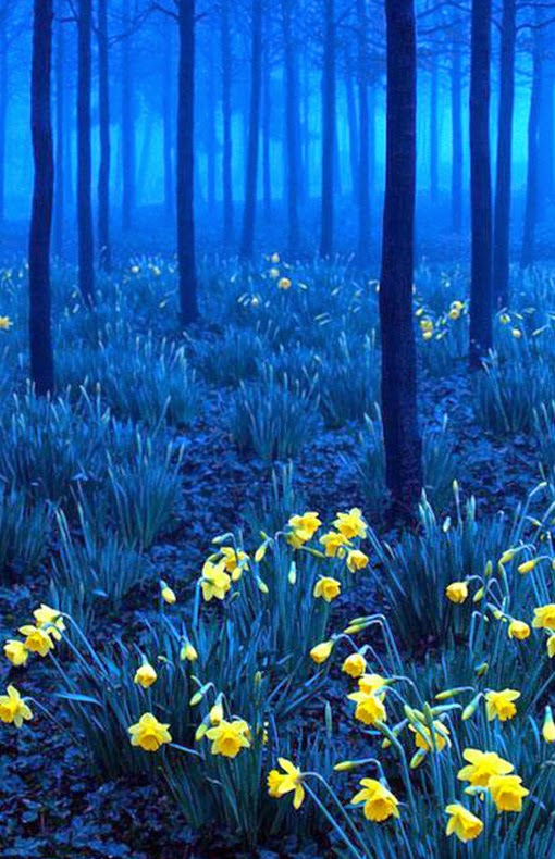 Black-Forest-Germany