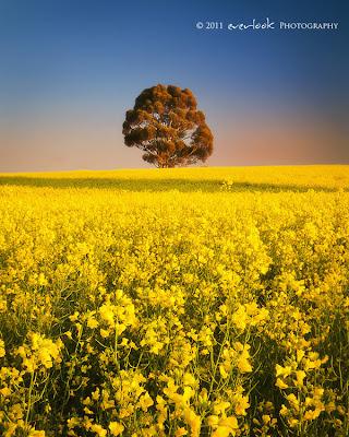 Clare, South Australia