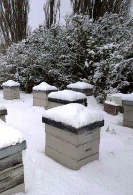 Image result for διαχειμαση μελισσων