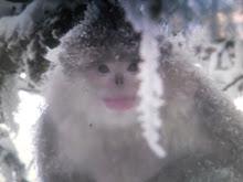 China's monkey