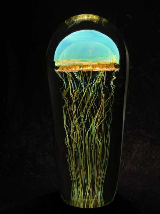 beautiful jellyfish pictures amazing creatures