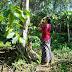 Mengapa Manusia Bali Mengupacarai Pohon Saat Tumpek Wariga?