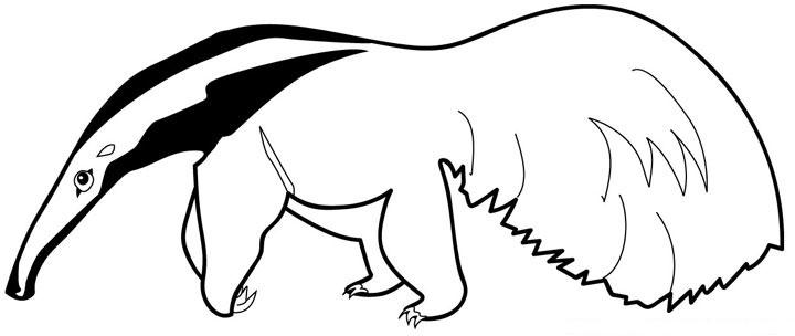 Animales para colorear: Oso Hormiguero