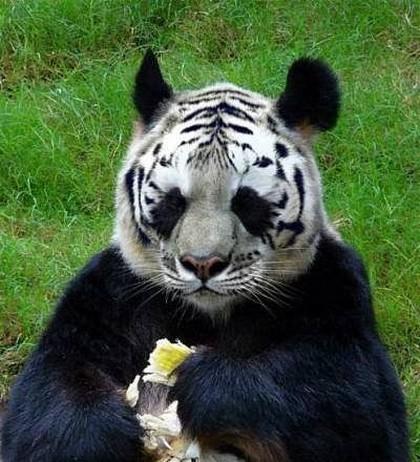 Животные пострадавшие от Фотошопа
