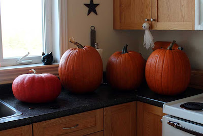 This year's selection of pumpkins are ready to be gutted.