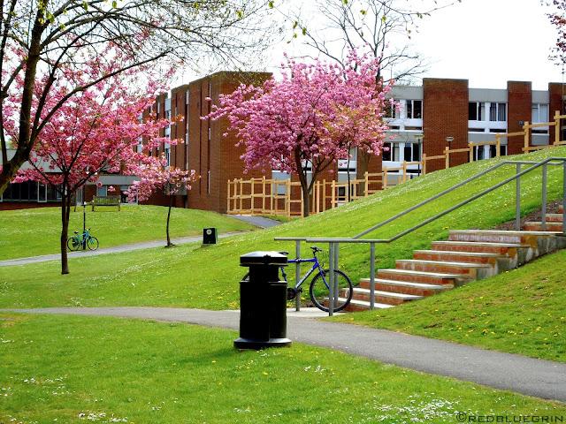 Campus at Sussex University, Brighton, UK