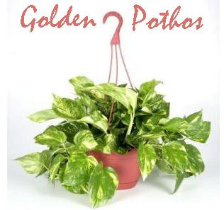 Indoor plants for fresh healthy air sweet additions - Healthiest houseplants fresh air delight ...