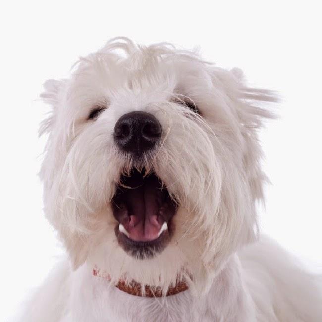 Dieta regenerująca psią wątrobę