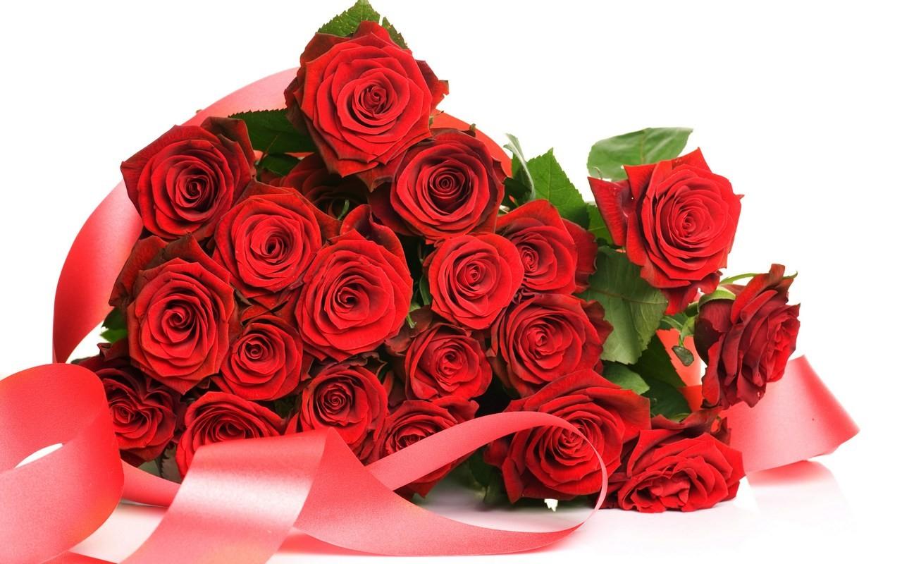 Tải hình nền hoa hồng tuyệt đẹp