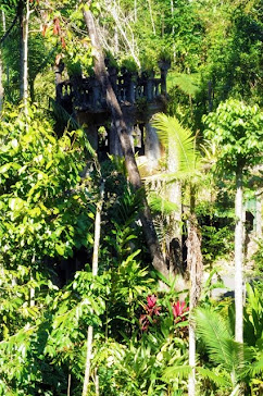 Castle in the Rainforest