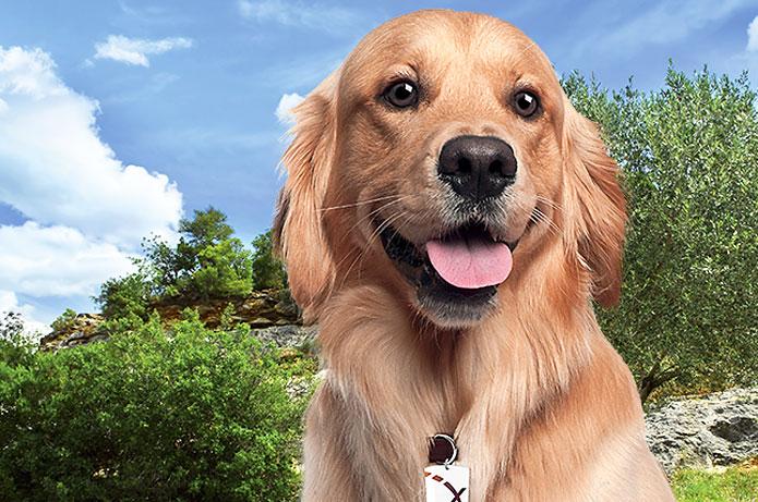 Défi : lutte contre les parasites canins