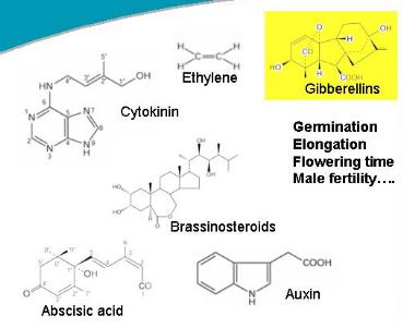 hormon tumbuh seperti auksin, giberelin, sitokinin, asam absisat, gas etilen