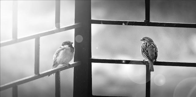 Amazing Birds Black and white photography