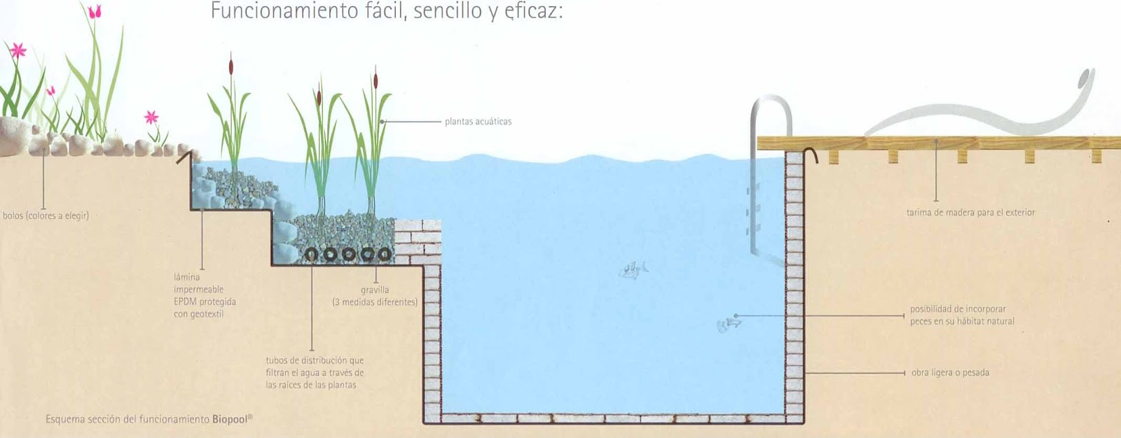 Crea tu jard n piscinas naturales o lagos artificiales for Como se hace un lago artificial