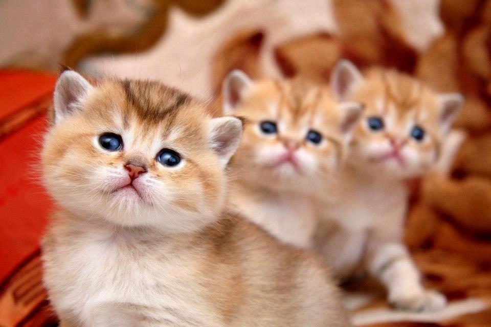 foto gatitos tiernos muchas fotos