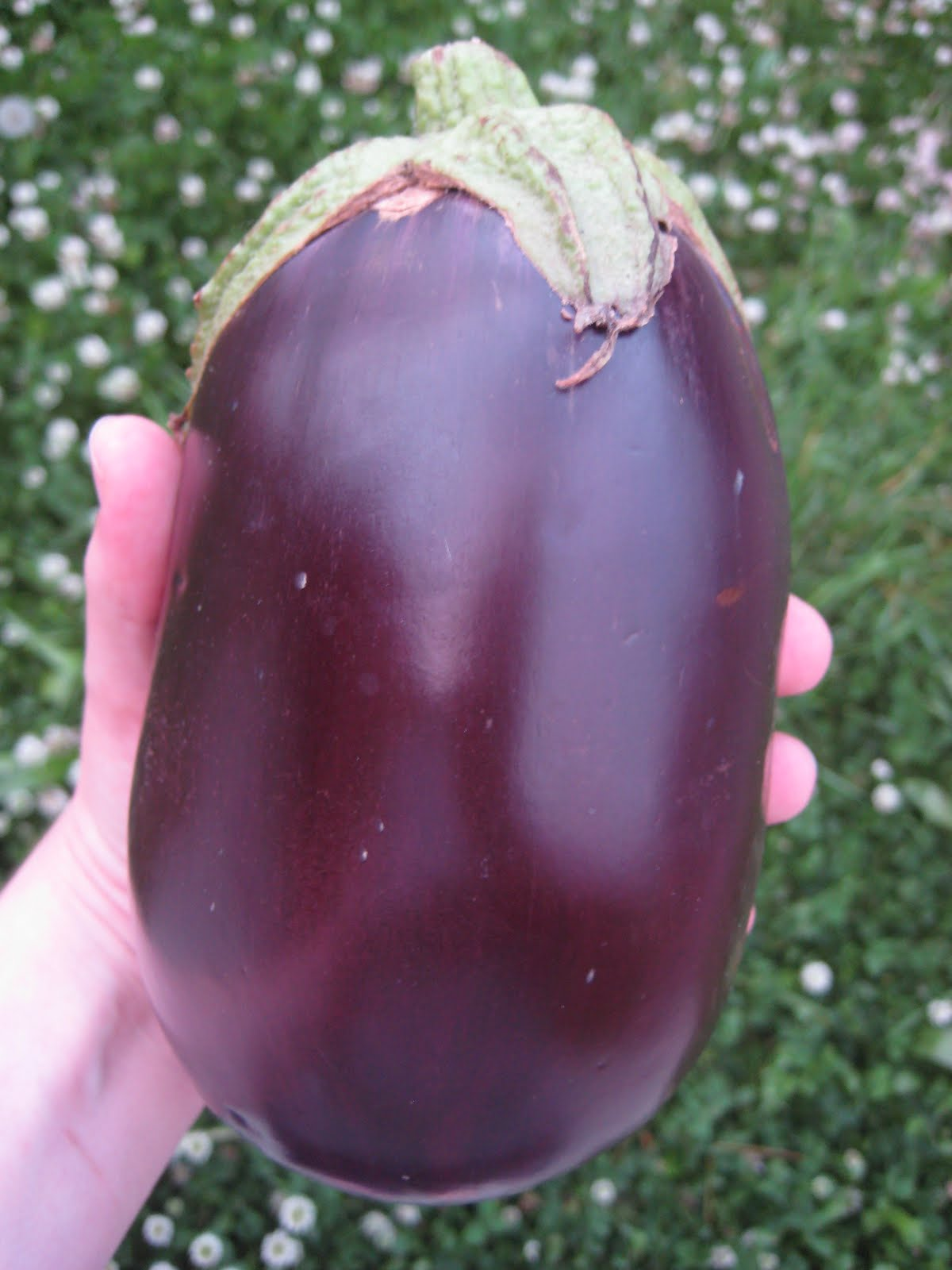Anktangle: Farm Fresh: The Eggplant!