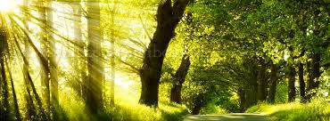 My Blog - Sun Rays