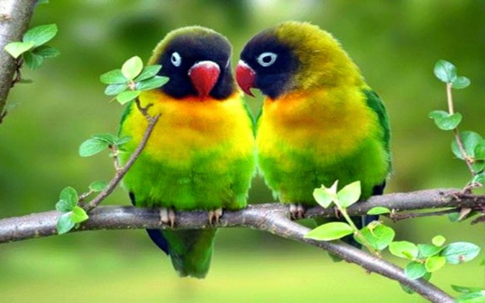love birds dating site Angry brides: indian dating site launches anti-dowry facebook game based on angry birds  com has always believed that marriage is an institution of love,.