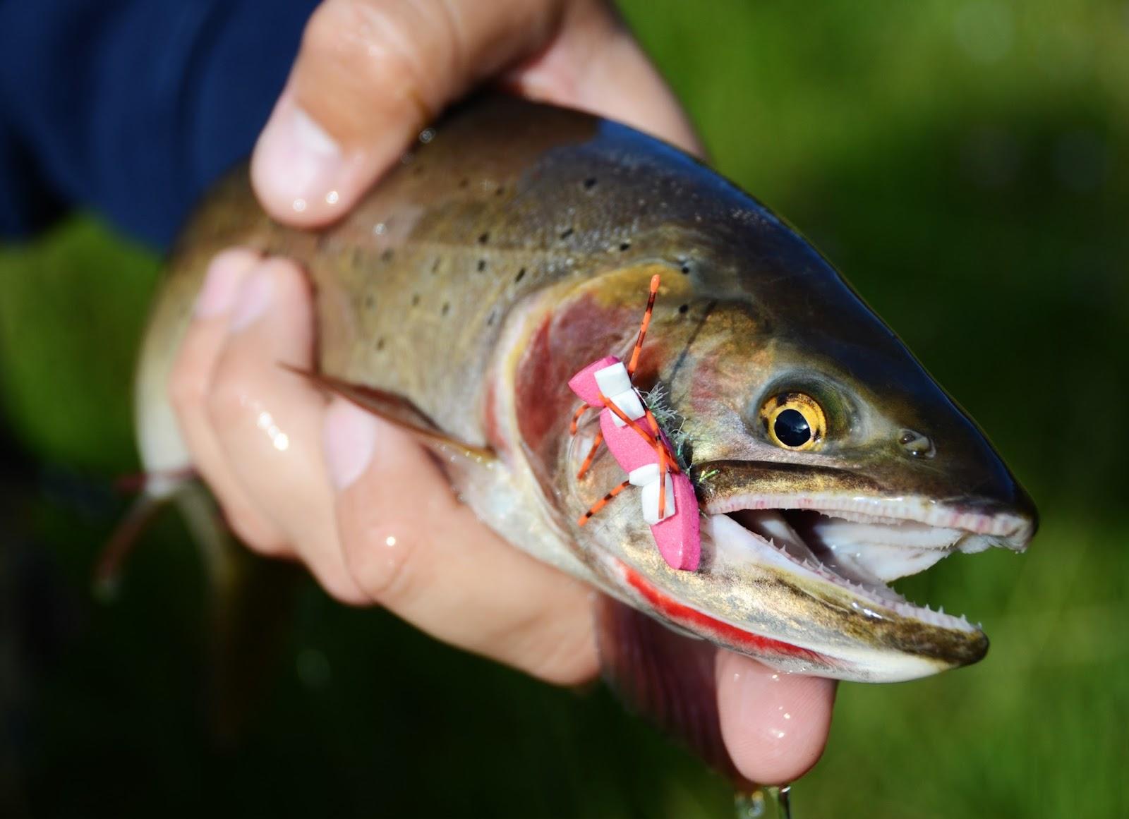 Mutated Fish In Chernobyl | www.imgkid.com - The Image Kid ...