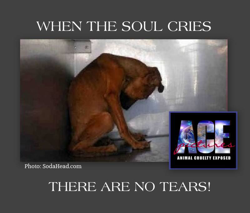 when the soul cries there are no tears