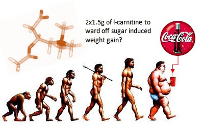 carnitine loading revisited: 3g carnitine per day ward off vitargo, Muscles