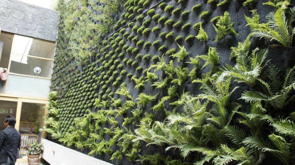 Actitud sustentable sa de cv muros verdes for Muro verde sistema constructivo