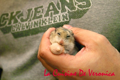 La Cuisine De Veronica 中國倉鼠 Chinese Hamster