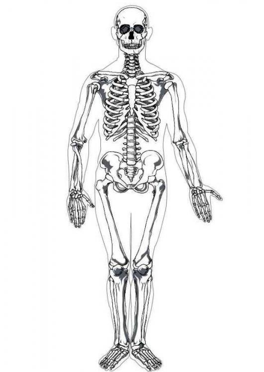 Imagenes del esqueleto humano - Imagui