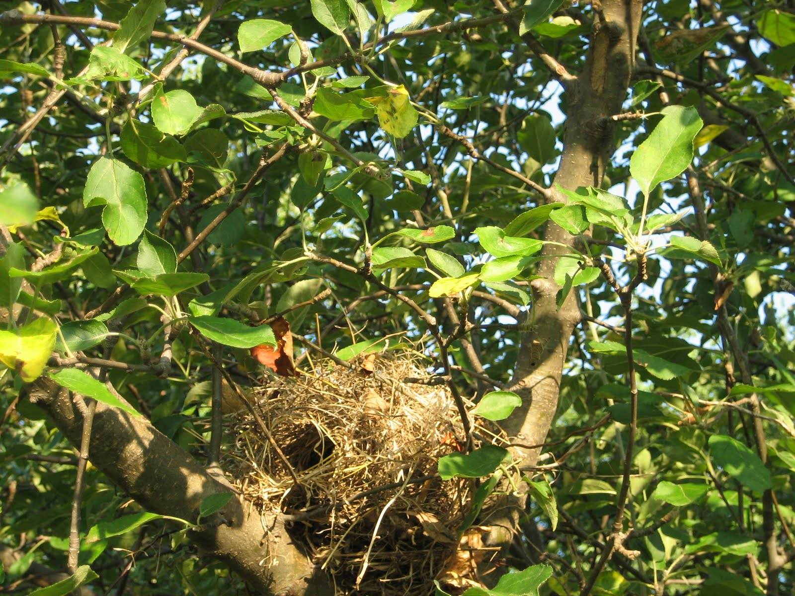 how to make a bird nest with grass