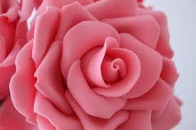 Tanaman Itu Indah Bunga Mawar Pink