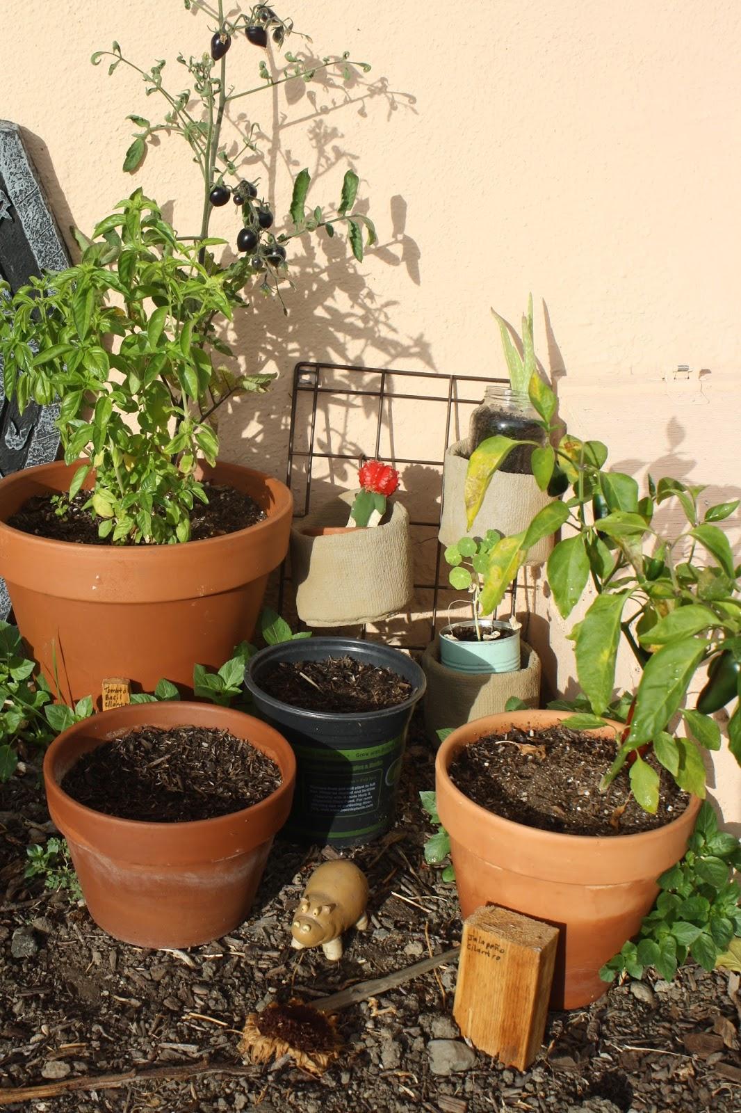 Worm update & photos from the garden