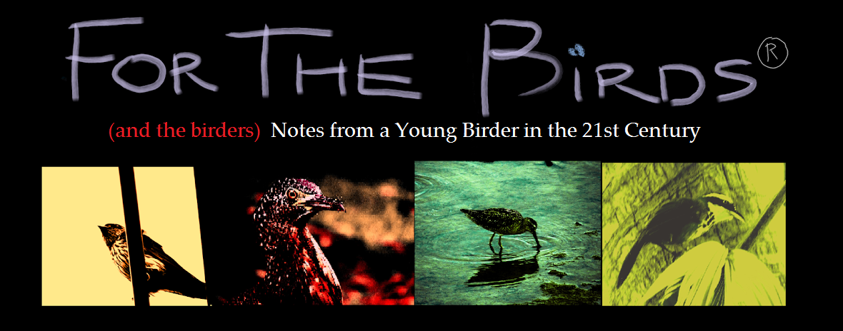 For the Birds: Notes from a Young Birder