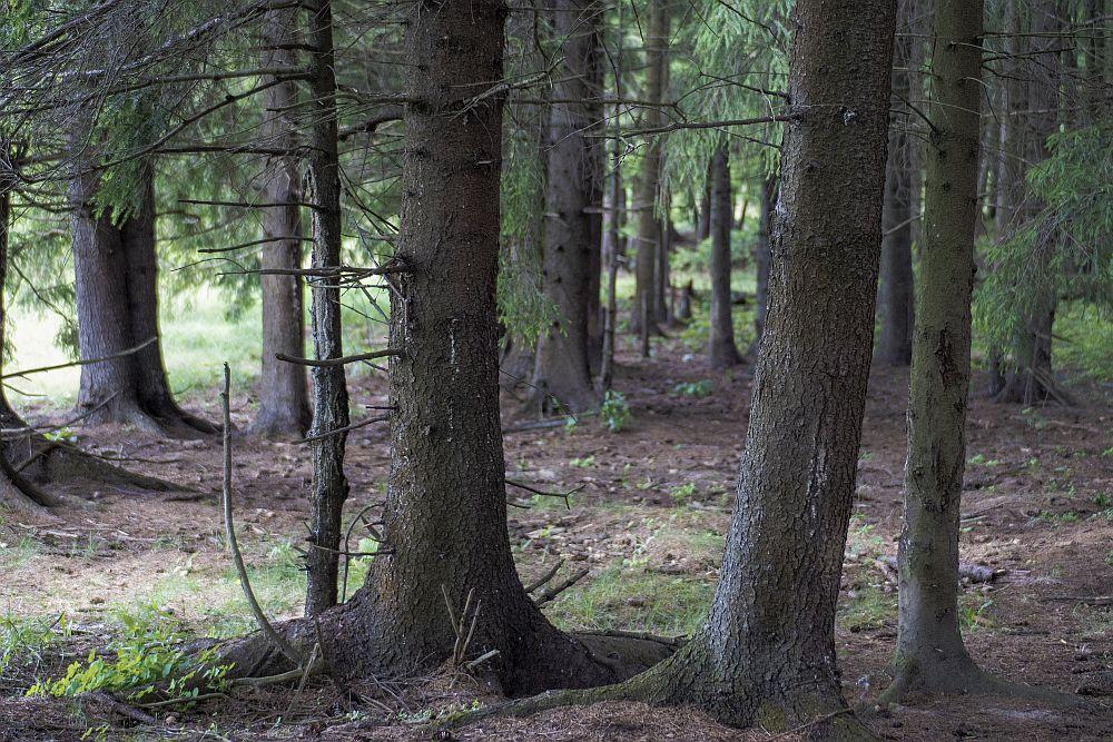 тёмный лес