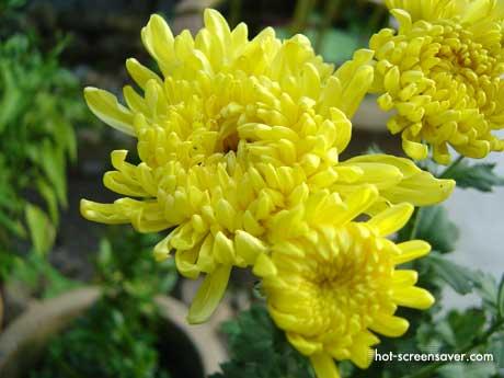 Hoa Đẹp   Hình Ảnh Hoa Đẹp   Hình Hoa Đẹp Nhất Thế Giới