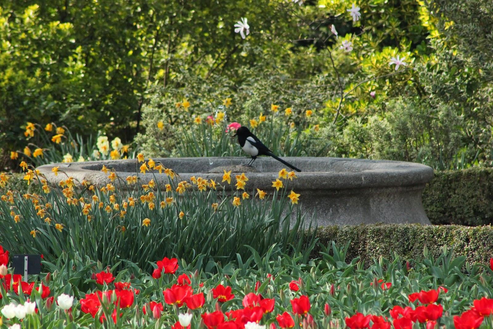 Arte y jardiner a flores en abundancia - Jardines bonitos y sencillos ...