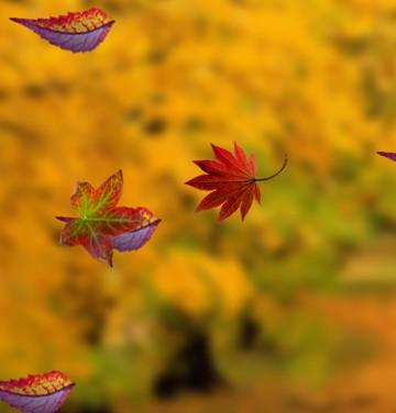 Gadgets para tu blog for Arboles que no se le caen las hojas en invierno