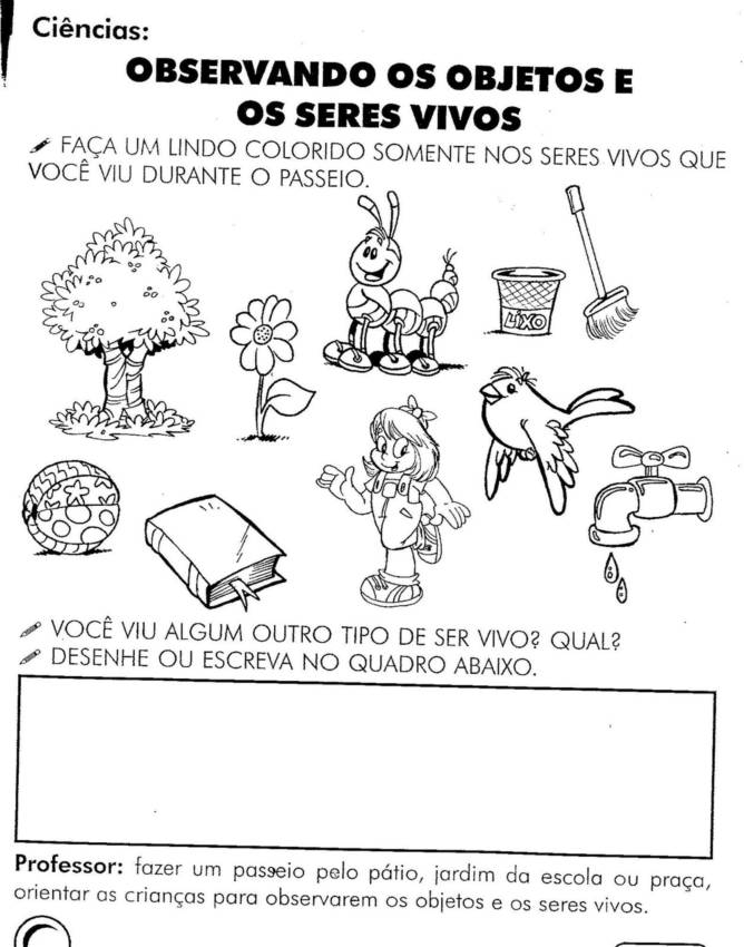 SERES VIVOS E N  O VIVOS ATIVIDADES EXERC  CIOS DESENHOS COLORIR