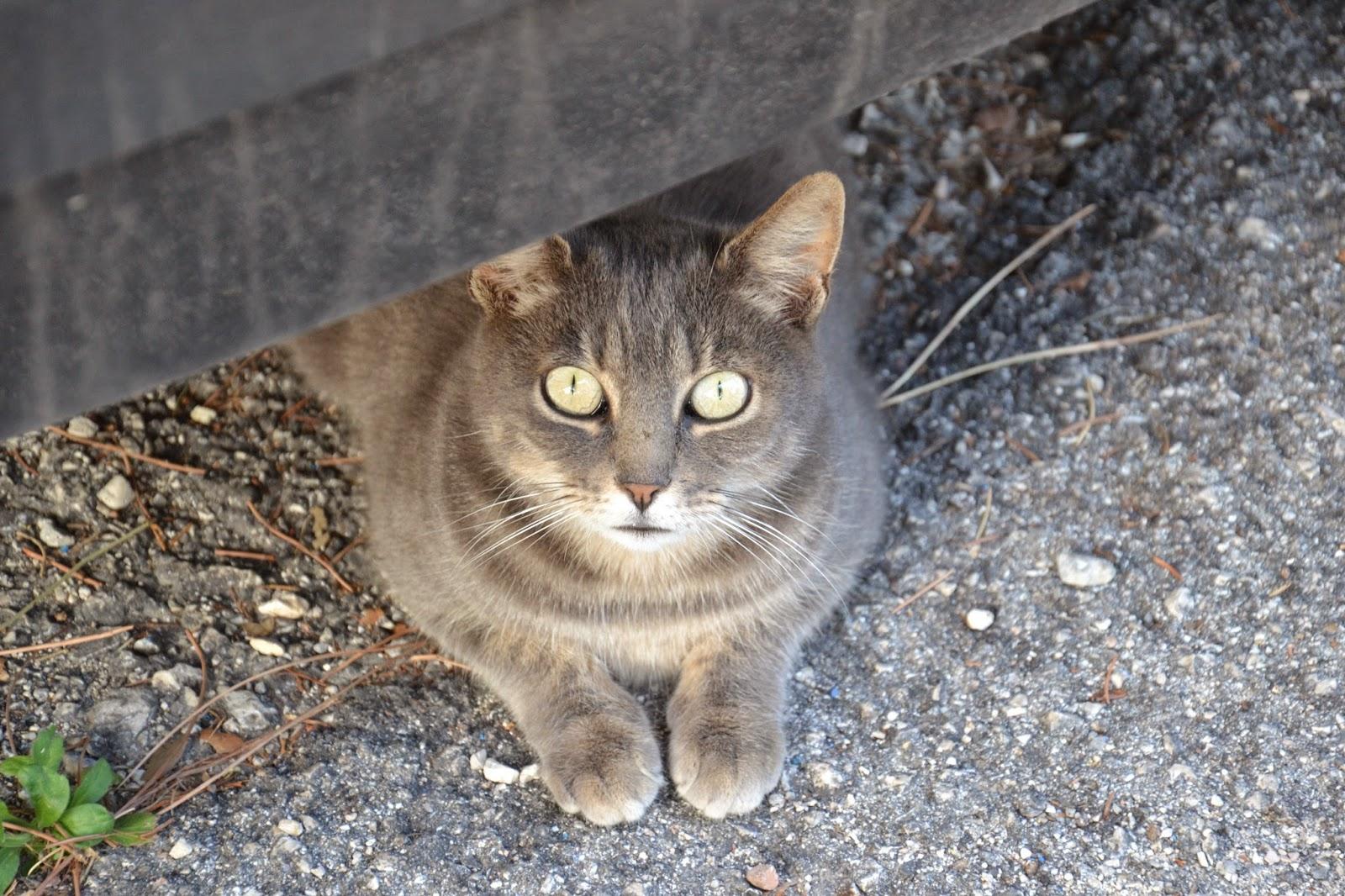 chat spoleto