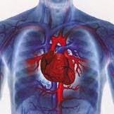 obat-jantung-koroner