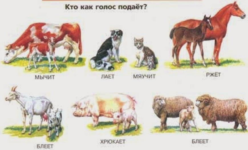 реферат на тему животные артики 1 класс