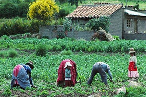Foto de Agricultura en la sierra