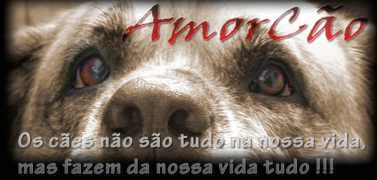 AmorCão - Proteção