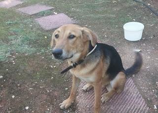 Βρέθηκε στη περιοχή Γλυφάδας θηλυκό σκυλάκι καθαρό και με λουράκι και υπάκουο. Το ψάχνει κανείς?