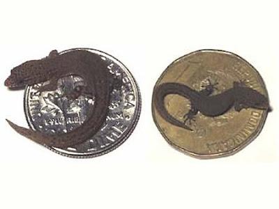 أصغر الحيوانات في العالم 09.jpg