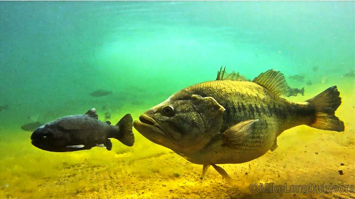 http://www.mikelongoutdoors.com/underwater-bass-pictures/